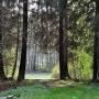 Arboretum im. Powstańców 1863r