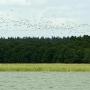 Rezerwat wigierski to ptasi raj.