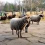 Towarzyszące przyjezdnym gościom zwierzęta są