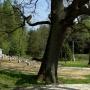 Cmentarz Wojenny 1831